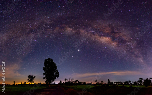 Fotografie, Obraz Panorama Night starry sky with purple milky way and old tree in forest dark night landscape