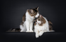 Handsome Duo Of Look Alike Nor...