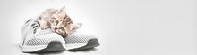 Cute Tabby Kitten Lying On Gray Shoe Look At The Camera Web Banner With Copy Space