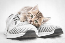 Cute Tabby Kitten Lying On Gray Shoe Look At The Camera