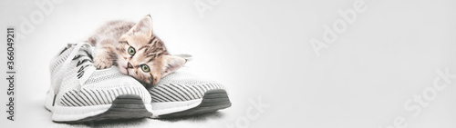 Carta da parati Cute tabby kitten lying on gray shoe look at the camera web banner with copy spa