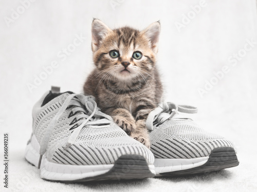Cute tabby kitten sitting on shoes and watching vigilantly Wallpaper Mural