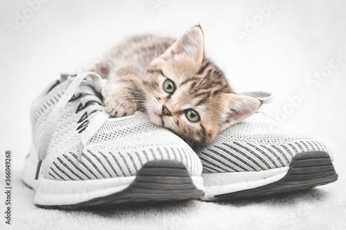 Obraz Cute tabby kitten lying on gray shoe look at the camera - fototapety do salonu