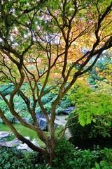 Panel Szklany Drzewa Baum, Japanischer Garten, Würzburg