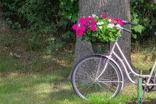 Closeup Of Pink Colored Bike With Colorful Blooming Flower Basket In Front Of Green Foliage