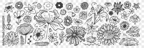 recznie-rysowane-kwiaty-doodle-zestaw