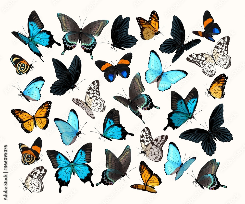 Fototapeta Big vector set of high detailed butterflies