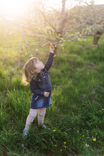 Little Toddler Girl On A Walk In An Orchard.