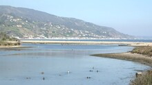 Ducks Swimming In Malibu Lagoon, A Nature Preserve That Is Part Of The Pacific Flyway