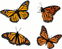 Set Of Monarch Butterflies Pat...