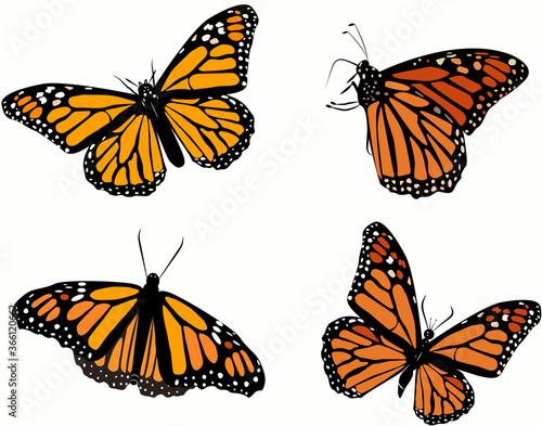 Obraz na plátně set of monarch butterflies pattern