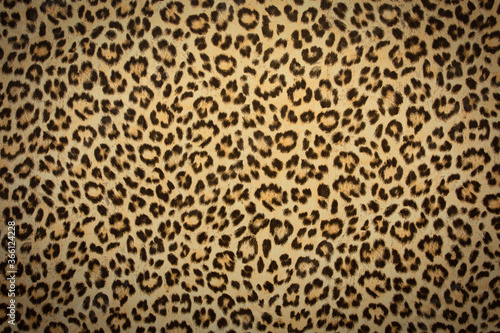 leopard skin background texture, real fur retro design, close-up wild animail hair modern