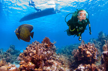 Scuba Diver With French Angelf...