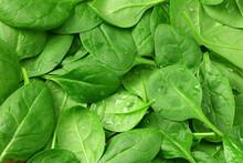 Spinach Leaves Background. Spi...