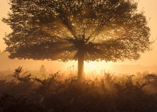 A Stunning Misty Sunrise And L...