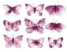 Watercolor Butterflies And Mot...