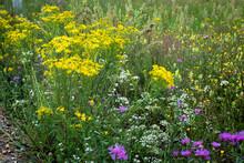 Flowering Meadow In Russia. Infinite Field. Different Herbs And Flowers In Field.