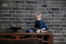 Home Cat In Classic Decoration