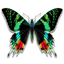 Digital Illustration Of A Madagascan Sunset Moth Butterfly Iridescent Green Powdered On Greenish Wings With Red Orange Spots For Collectors And Design Patterns.