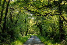 UK, Wales, Cresselly, Empty Footpath In Green Lush Forest