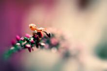 Close Up Of Ladybird Beetle Crawling On Plant