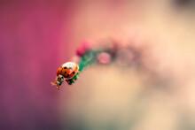Close-up Of Ladybug Crawling O...