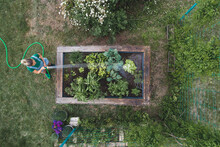 Drone Shot Of Woman Watering P...