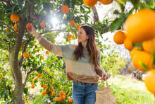 Mid Adult Woman Picking Orange...