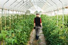 Female Farm Worker Woman Check...