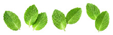 Fresh Mint Leaves Set, Isolate...