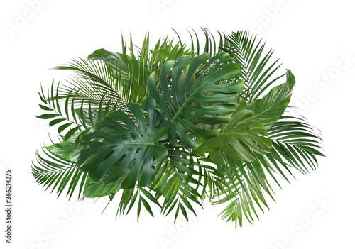Cuadros en Lienzo Different fresh tropical leaves on white background