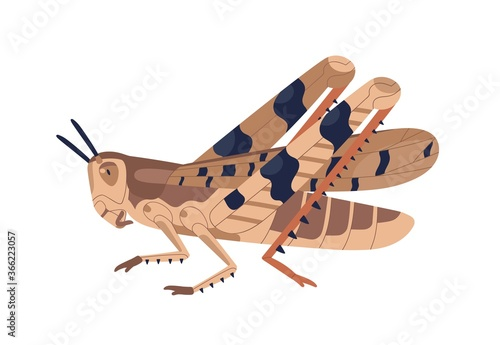Fotografía Colorful locust vector illustration