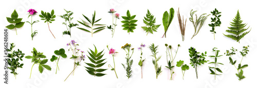 Fototapeta herbarium of various plants on a white background. Freshly cut plants. Botanical collection. Forest flowers, herbs, berries obraz