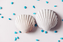White Sea Shell Surrounded By ...