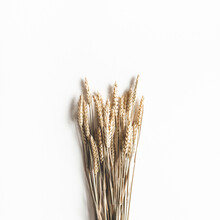 Autumn Composition. Wheat Ears...