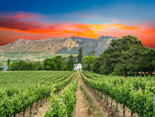Buitenverwachting Wine Estate ...