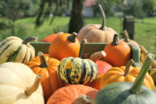 Various Pumpkins And Squashes ...