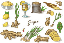 Ginger Root, Chopped Rhizome, Fresh Plant, Bag And Tea In Glass Cup. Vector Engraved Hand Drawn Sketch. Pieces Of Ingredient Set. Detox Spice.