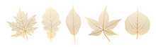 Set Leaves Of Gold On White. Vector Illustration.