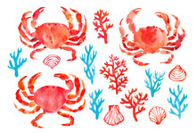 Collection Of Sea Symbols: Crabs, Corals, Shells. Hand Drawn Watercolor Illustration In White. Isolated