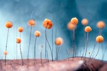 Little Fungus On Dry Leaf