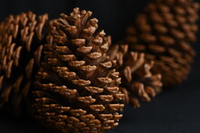 Pinecones On Black Background.