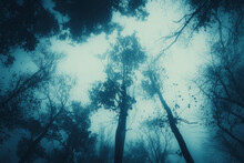 Trees In Dark Scary Forest At ...