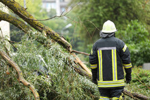 Firefighters Help Clean Up The Effects Of A Fallen Tree On Cars After The Storm In A Rainy Day.