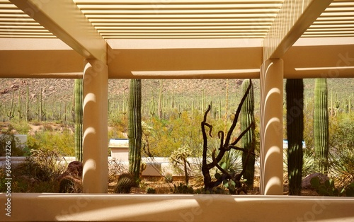 beautiful naturalistic architecture seamlessly frames the Arizonan desert cactus plant life Canvas Print