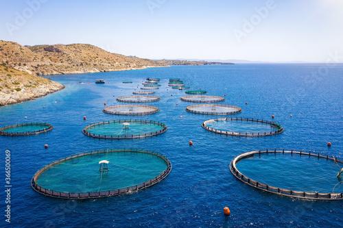 Luftaufnahme einer Fischfarm mit runden Zuchtnetzen in dem blauem Meer der Ägäis Canvas-taulu