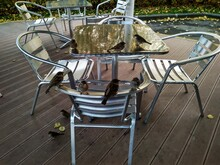 Light Metal Aluminum Chairs In...