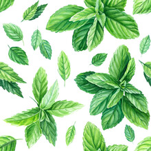 Peppermint Leaves. Seamless Patterns. Watercolor Painting, On Isolated Background
