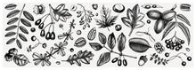 Autumn Botanical Set. Collecti...