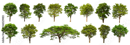 isolated tree green set is located on a white background Canvas Print